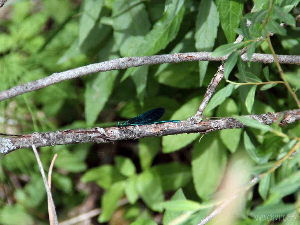 insecto verde sobre rama y hojas de colores verdes en Lagos de Plitvice Croacia,