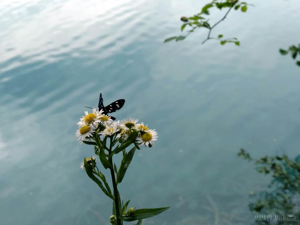 Mariposa sobre flores. Lagos de Plitvice Croacia, colores verdes